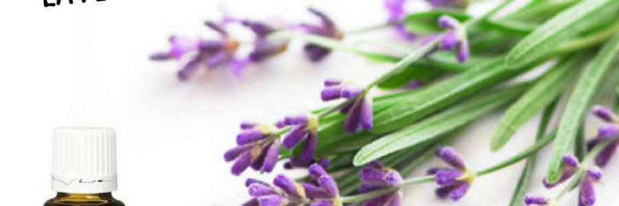 20 manieren om Lavendel te gebruiken